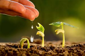 Plantando las semillas