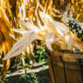 Cultivar mi maiz