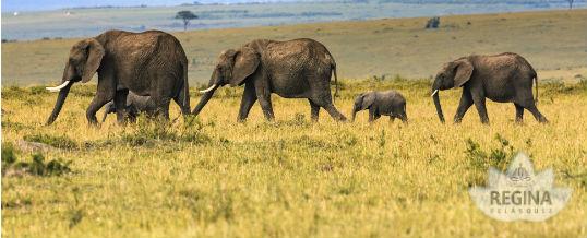 Comiéndonos el elefante