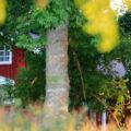 Casa escondida - Meditacion